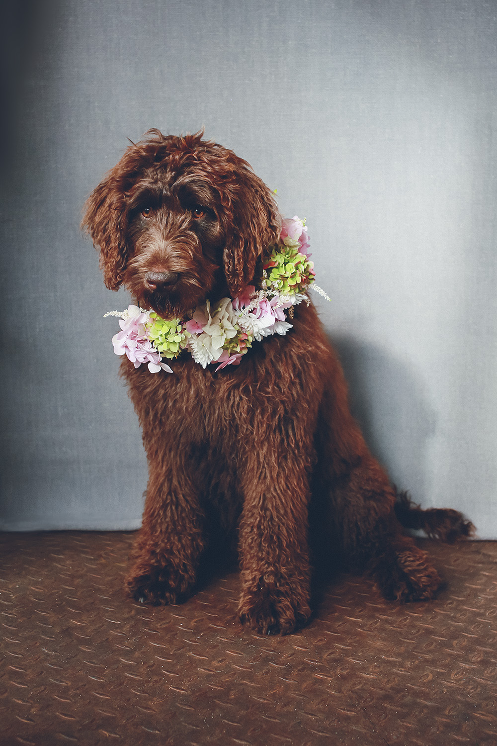 dogs-flowercrown-ihw-010