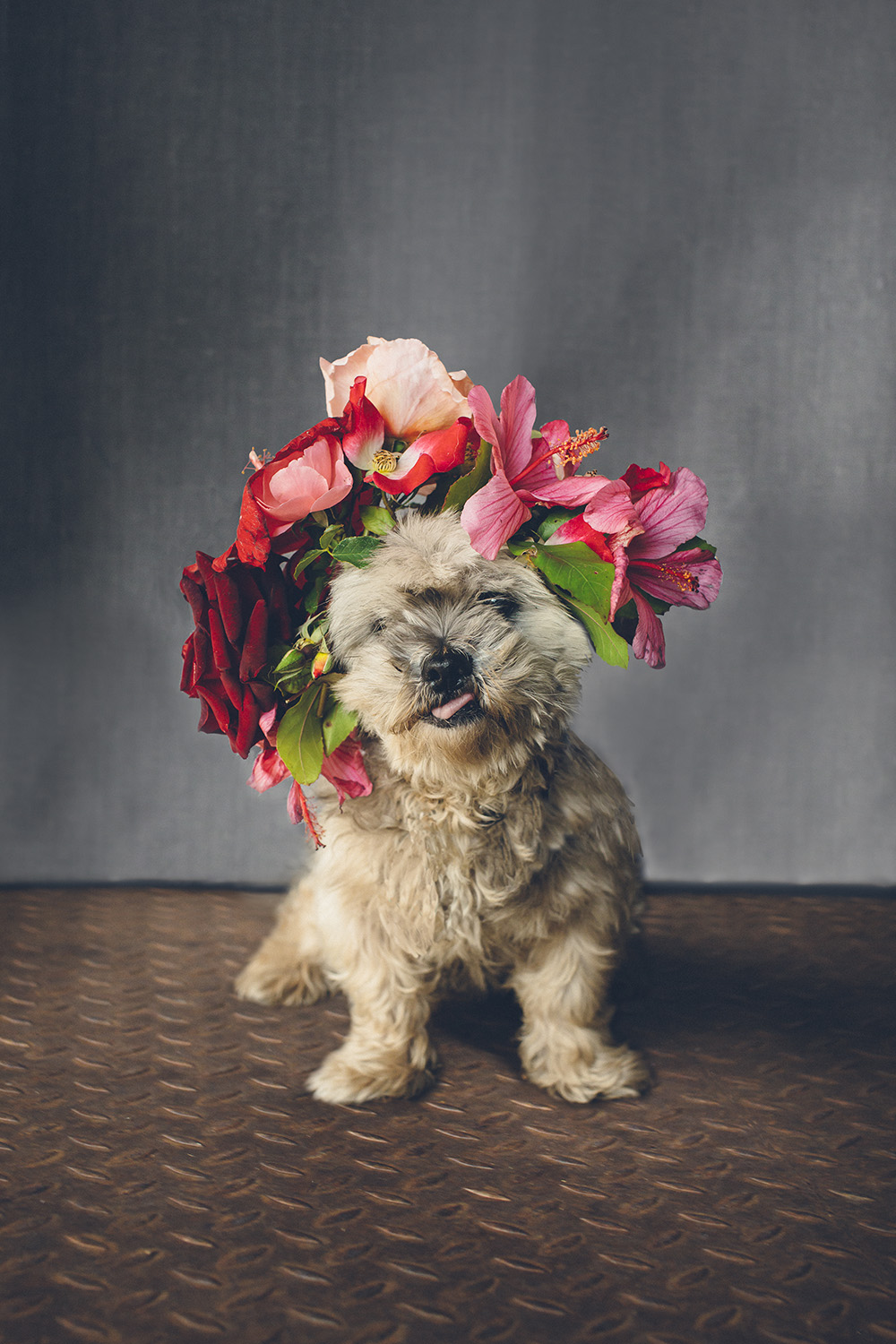 dogs-flowercrown-ihw-015