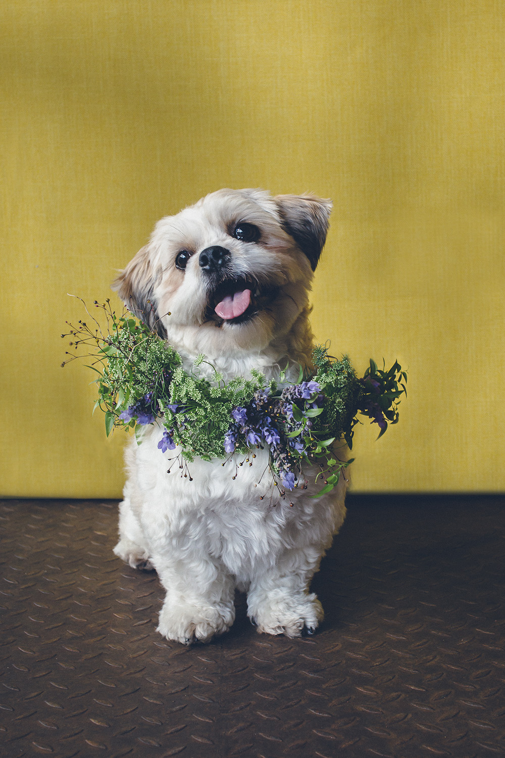 dogs-flowercrown-ihw-023