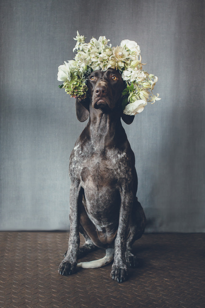 dogs-flowercrown-ihw-027