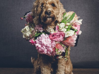 Dogs with Flowercrowns