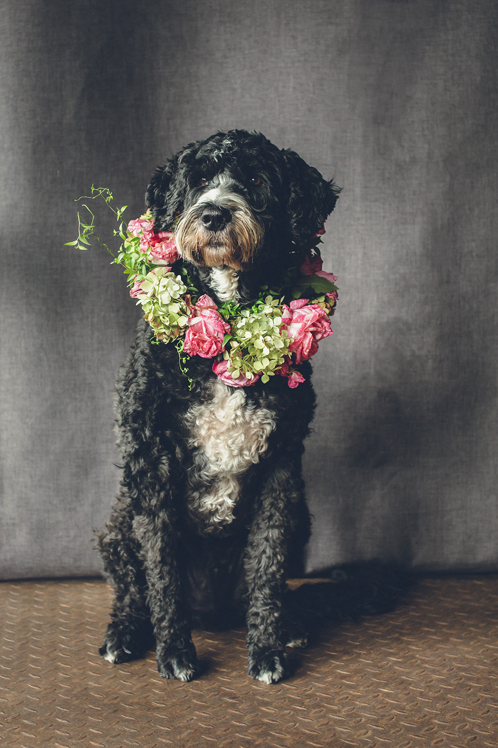 dogs-flowercrown-ihw-034