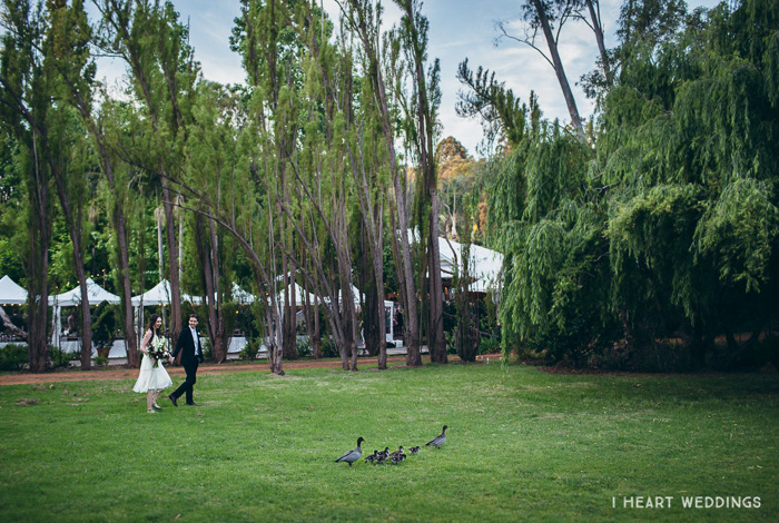 ducks in a field wedding