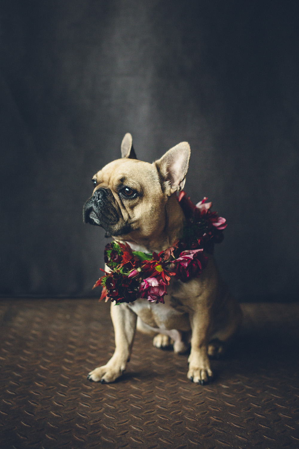 dogs-flowercrown-ihw-006