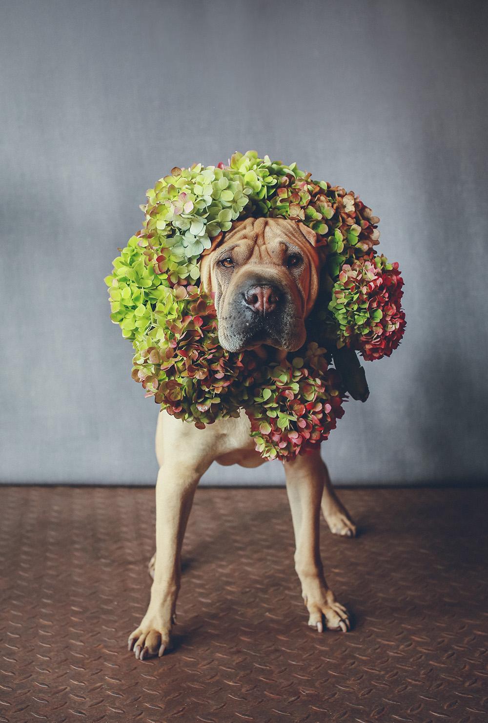 dogs-flowercrown-ihw-008