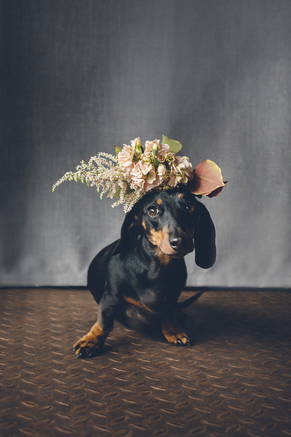 dogs-flowercrown-ihw-012