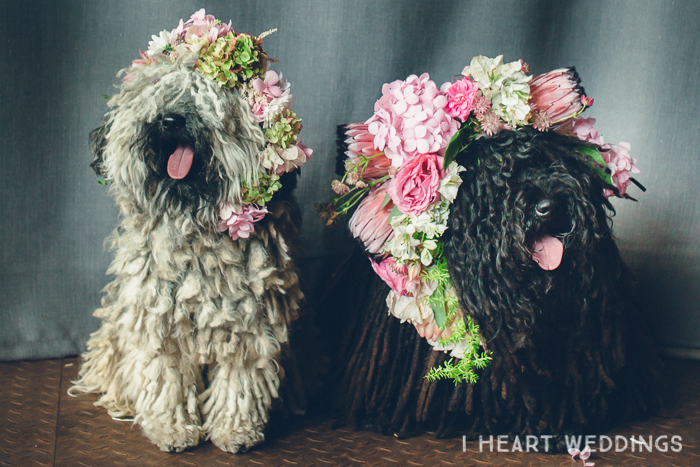 dogs-flowercrown-ihw-018 copy