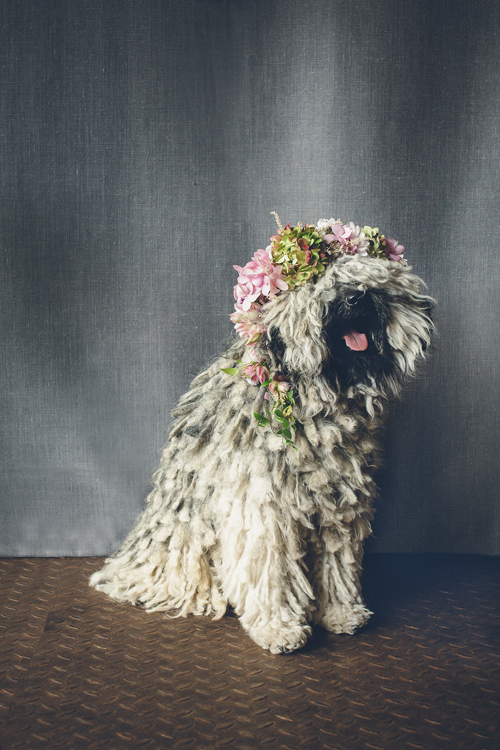 dogs-flowercrown-ihw-022