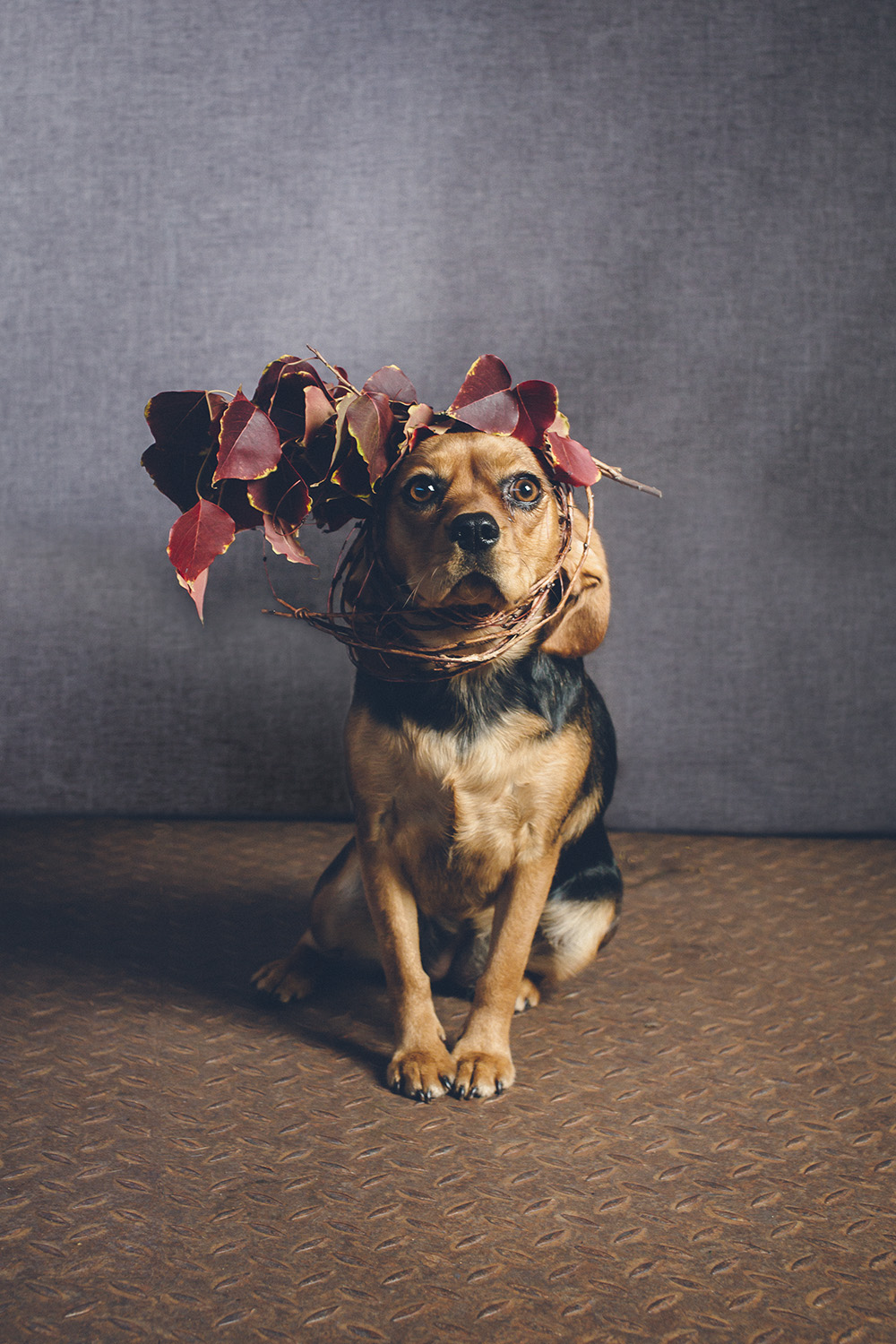 dogs-flowercrown-ihw-029