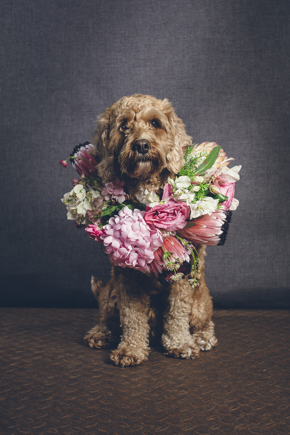 dogs-flowercrown-ihw-030