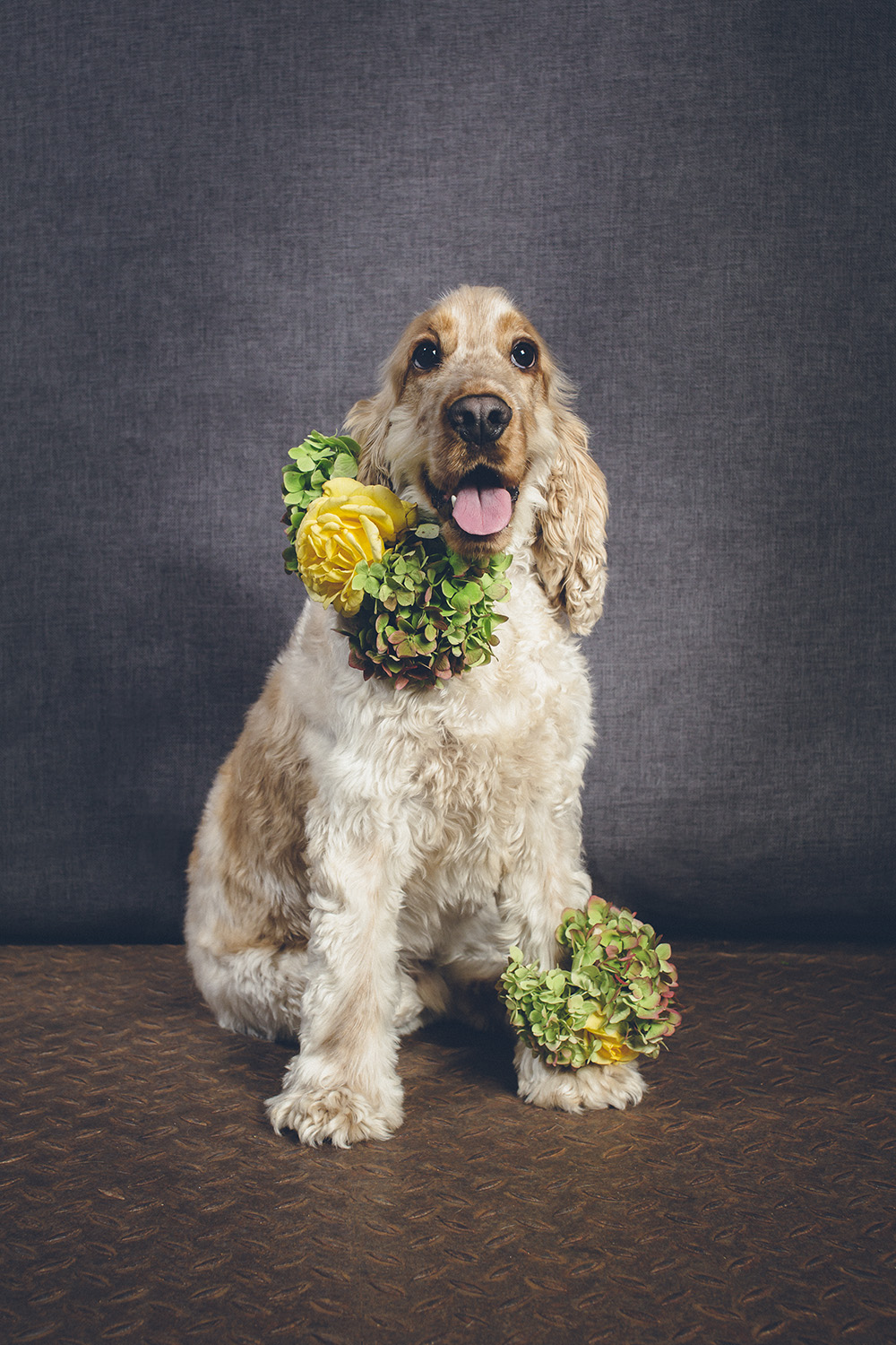 dogs-flowercrown-ihw-031