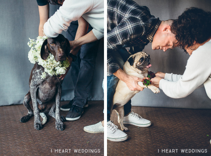 flowercrowns-dog-iheartweddings1