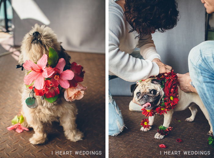 flowercrowns-dog-iheartweddings2