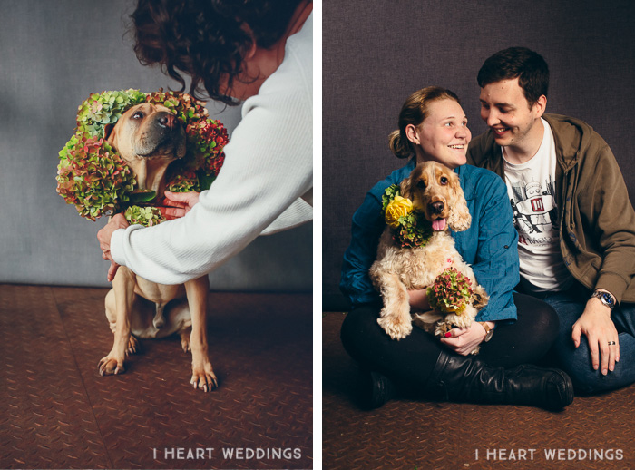 flowercrowns-dog-iheartweddings3