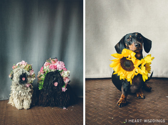 flowercrowns-dog-iheartweddings5