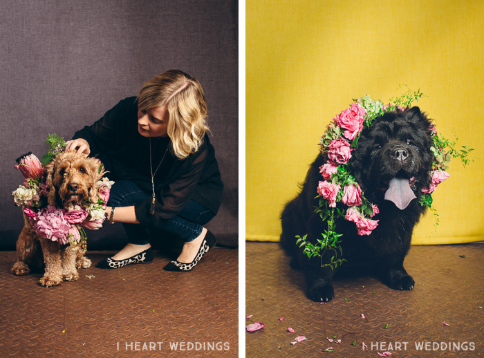 flowercrowns-dog-iheartweddings7