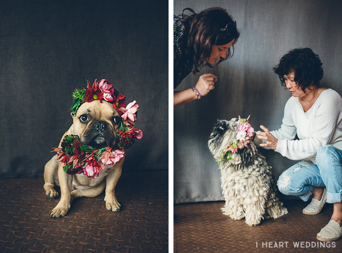 flowercrowns-dog-iheartweddings8